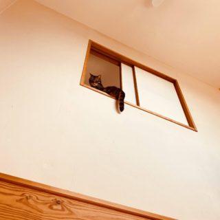 猫と暮らす平塚の家 内窓から視線